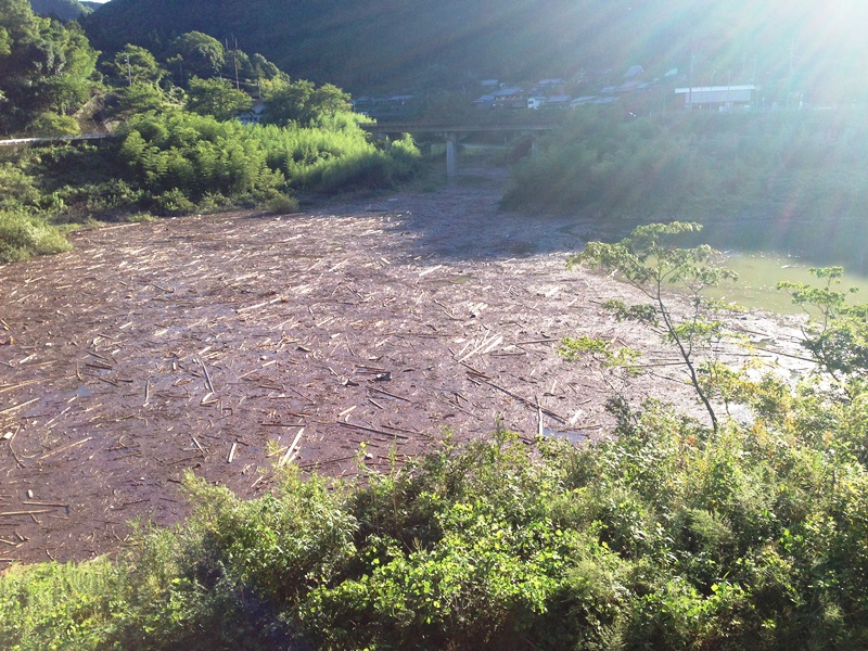 流木が流れ込んだダム上流