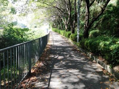 トトロ街道(美加の台付近)