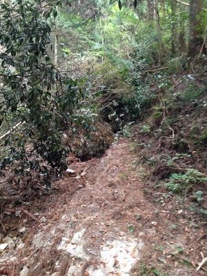 林道の先は事実上の行き止まり