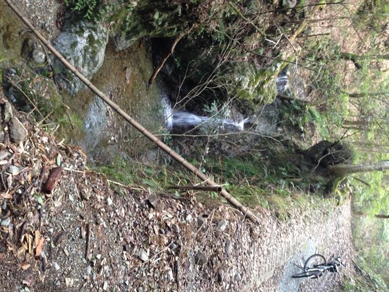 岩屋谷林道の川