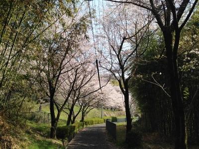 トトロ街道(南海高野線旧線跡)