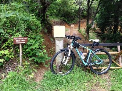 岩湧の森ルートのピーク