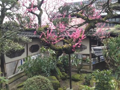 立派な日本庭園