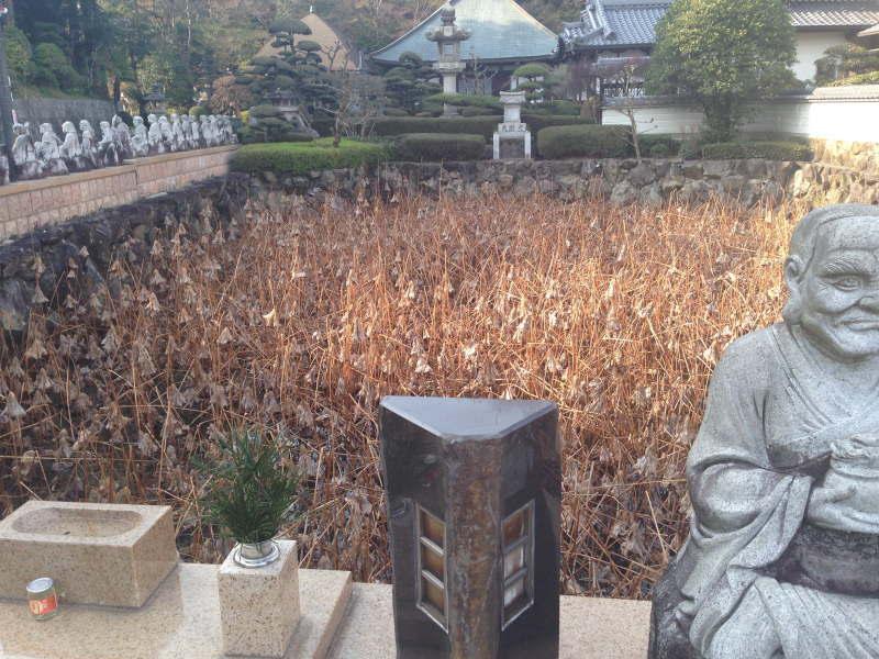 興禅寺の蓮の池
