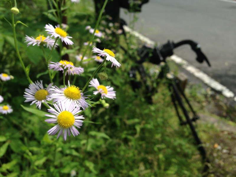 紀見峠に咲く花