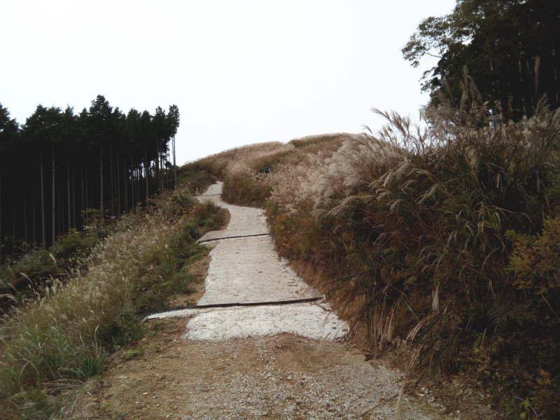 岩湧山頂手前の坂は舗装されていた
