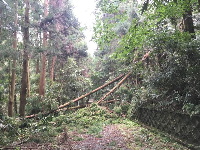 トトロ街道、倒木により通行止め